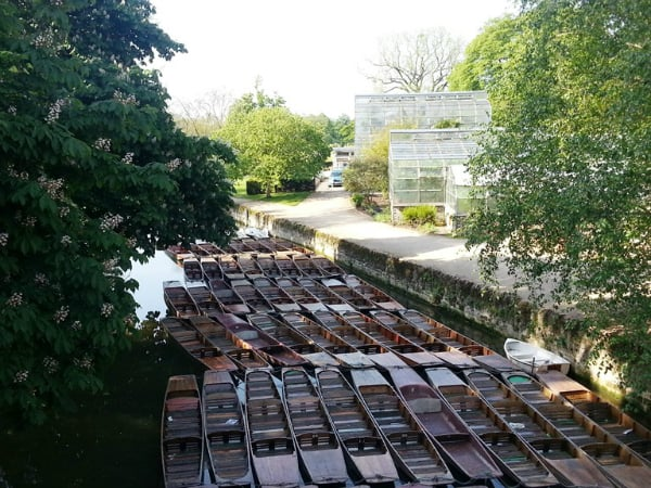 punts at the Botanic Gardens - oxon bloggers