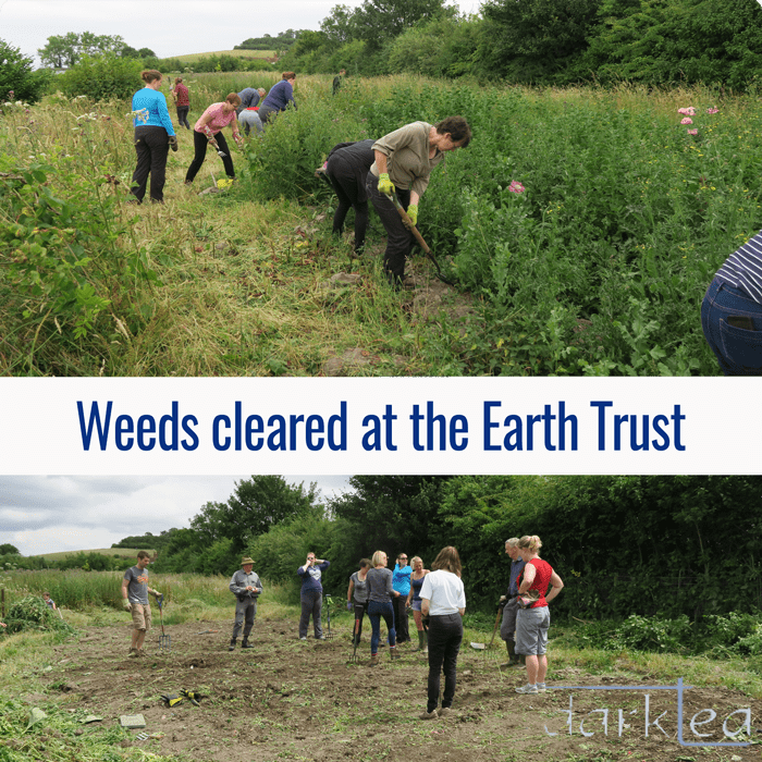 Clearing weeds at the Earth Trust